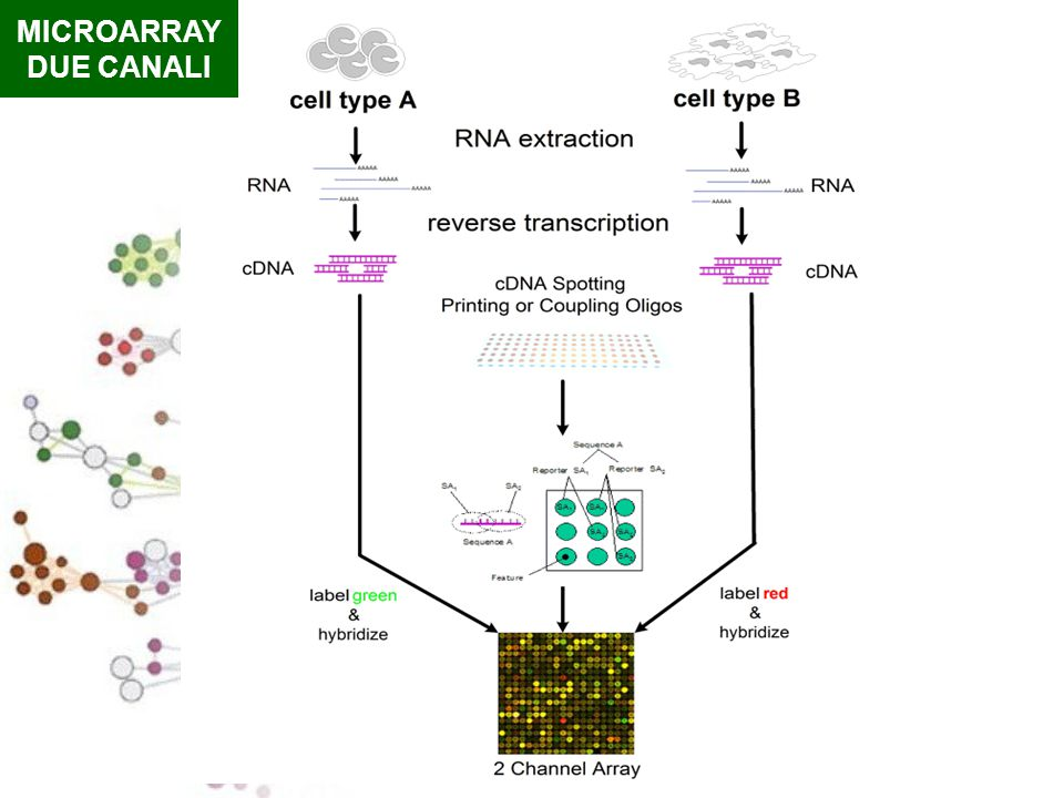 MICROARRAY DUE CANALI