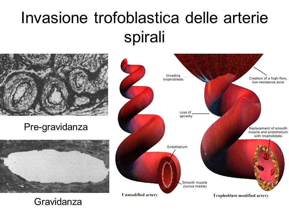 Invasione trofoblastica delle arterie spirali Pre-gravidanza Gravidanza