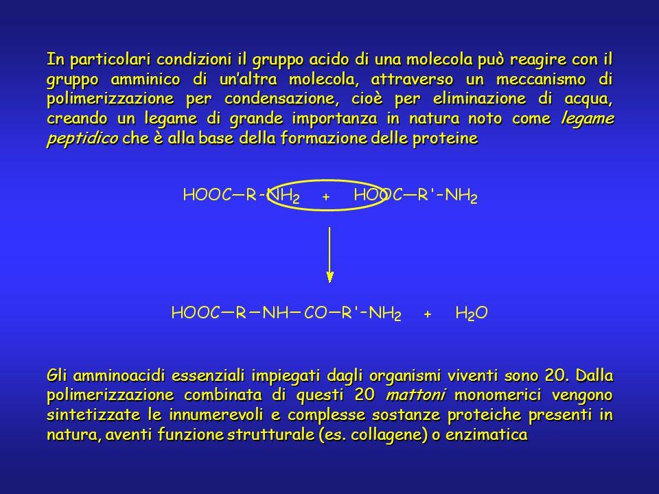 In particolari condizioni il gruppo acido di una molecola può reagire con il gruppo amminico di un'altra molecola, attraverso un meccanismo di polimerizzazione per condensazione, cioè per eliminazione di acqua, creando un legame di grande importanza in natura noto come legame peptidico che è alla base della formazione delle proteine Gli amminoacidi essenziali impiegati dagli organismi viventi sono 20.