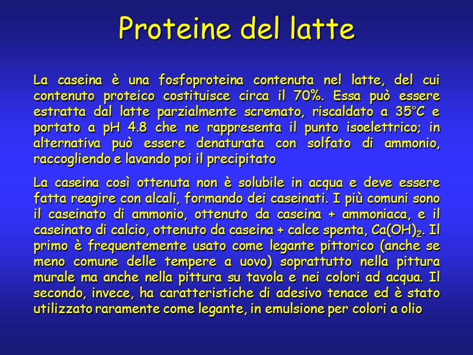 Proteine del latte La caseina è una fosfoproteina contenuta nel latte, del cui contenuto proteico costituisce circa il 70%. Essa può essere estratta d