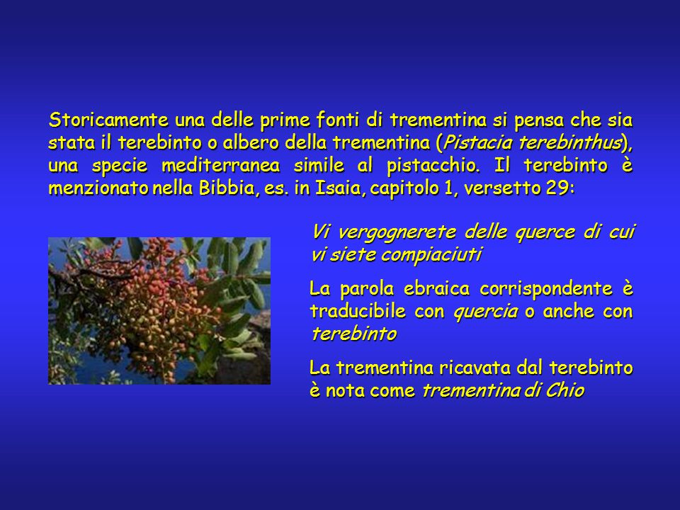Storicamente una delle prime fonti di trementina si pensa che sia stata il terebinto o albero della trementina (Pistacia terebinthus), una specie mediterranea simile al pistacchio.