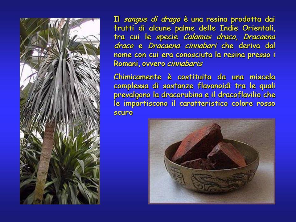 Il sangue di drago è una resina prodotta dai frutti di alcune palme delle Indie Orientali, tra cui le specie Calamus draco, Dracaena draco e Dracaena cinnabari che deriva dal nome con cui era conosciuta la resina presso i Romani, ovvero cinnabaris Chimicamente è costituita da una miscela complessa di sostanze flavonoidi tra le quali prevalgono la dracorubina e il dracoflavilio che le impartiscono il caratteristico colore rosso scuro