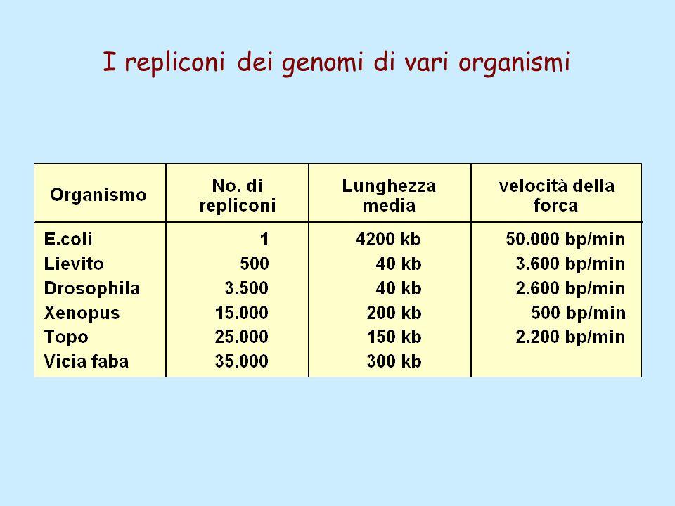 I repliconi dei genomi di vari organismi
