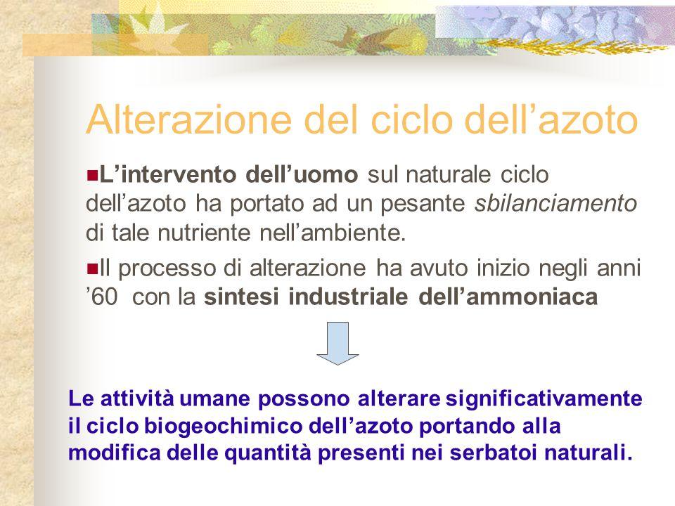 Alterazione del ciclo dell'azoto L'intervento dell'uomo sul naturale ciclo dell'azoto ha portato ad un pesante sbilanciamento di tale nutriente nell'a