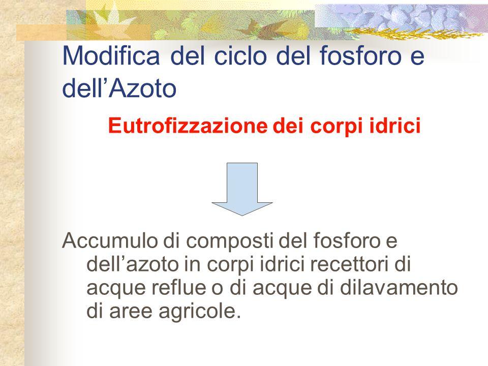Modifica del ciclo del fosforo e dell'Azoto Eutrofizzazione dei corpi idrici Accumulo di composti del fosforo e dell'azoto in corpi idrici recettori di acque reflue o di acque di dilavamento di aree agricole.