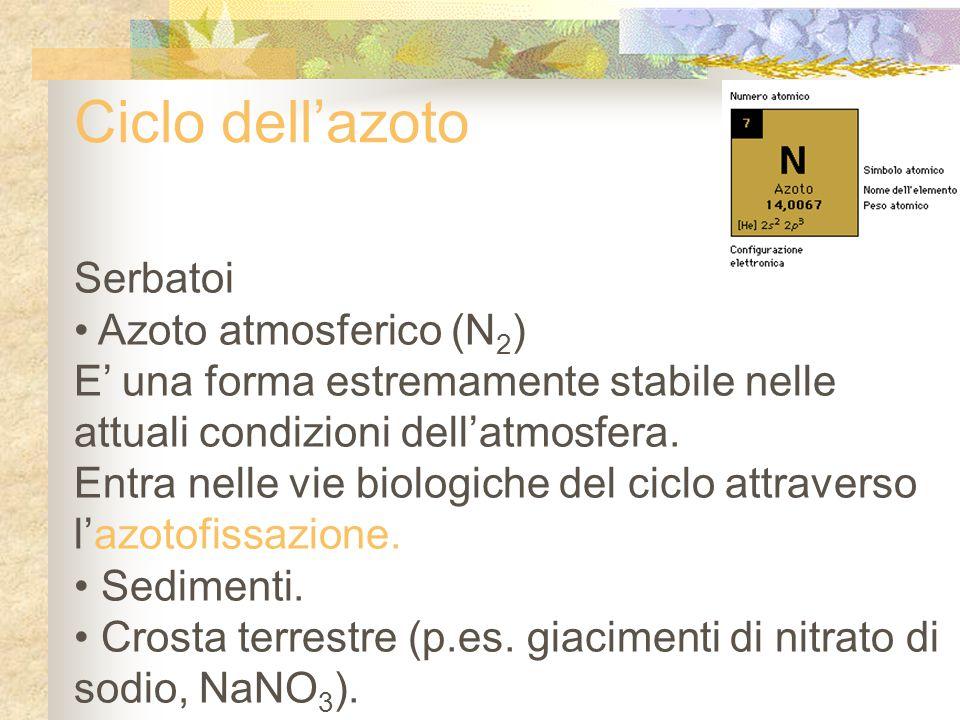 Ciclo dell'azoto Serbatoi Azoto atmosferico (N 2 ) E' una forma estremamente stabile nelle attuali condizioni dell'atmosfera. Entra nelle vie biologic