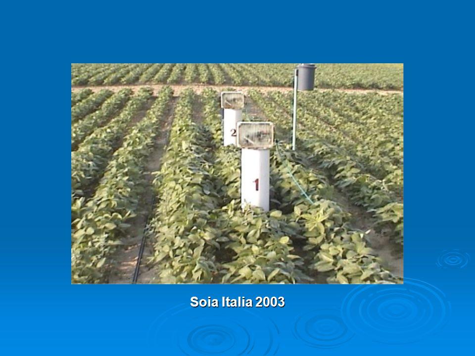 Soia Italia 2003