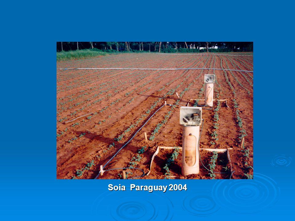 Soia Paraguay 2004