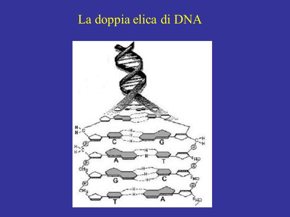 DNA telomerico