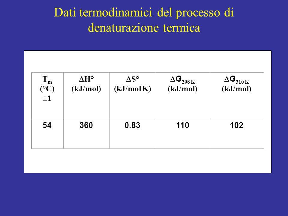 Dati termodinamici del processo di denaturazione termica T m (°C)  1  H° (kJ/mol)  S° (kJ/mol K)  G 298 K (kJ/mol)  G 310 K (kJ/mol) 543600.83110102