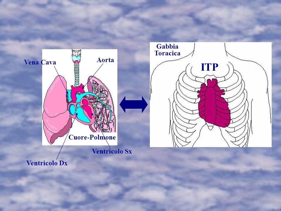 Cuore-Polmone Ventricolo Dx Ventricolo Sx Vena Cava Aorta ITP Gabbia Toracica