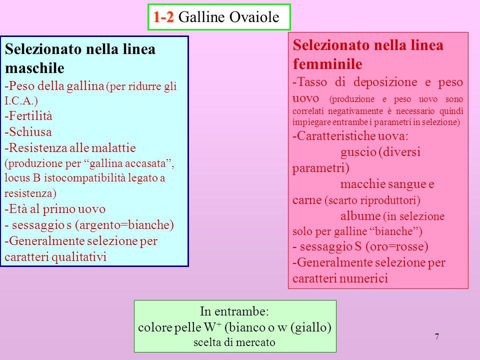 7 1-2 1-2 Galline Ovaiole Selezionato nella linea maschile -Peso della gallina (per ridurre gli I.C.A.) -Fertilità -Schiusa -Resistenza alle malattie (produzione per gallina accasata , locus B istocompatibilità legato a resistenza) -Età al primo uovo - sessaggio s (argento=bianche) -Generalmente selezione per caratteri qualitativi Selezionato nella linea femminile -Tasso di deposizione e peso uovo (produzione e peso uovo sono correlati negativamente è necessario quindi impiegare entrambe i parametri in selezione) -Caratteristiche uova: guscio (diversi parametri) macchie sangue e carne (scarto riproduttori) albume (in selezione solo per galline bianche ) - sessaggio S (oro=rosse) -Generalmente selezione per caratteri numerici In entrambe: colore pelle W + (bianco o w (giallo) scelta di mercato