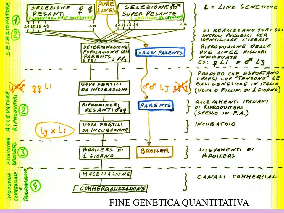 9 FINE GENETICA QUANTITATIVA
