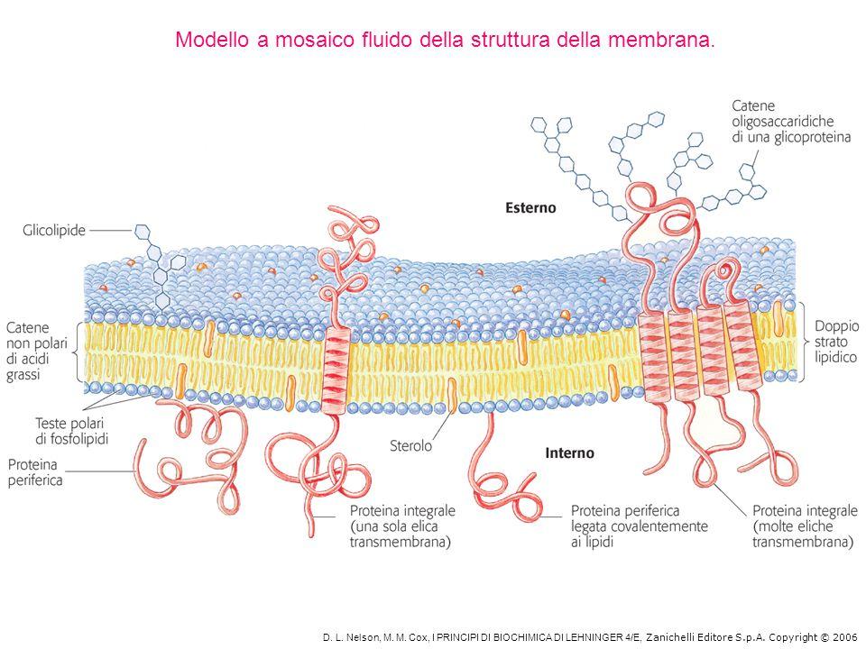 D. L. Nelson, M. M. Cox, I PRINCIPI DI BIOCHIMICA DI LEHNINGER 4/E, Zanichelli Editore S.p.A. Copyright © 2006 Modello a mosaico fluido della struttur