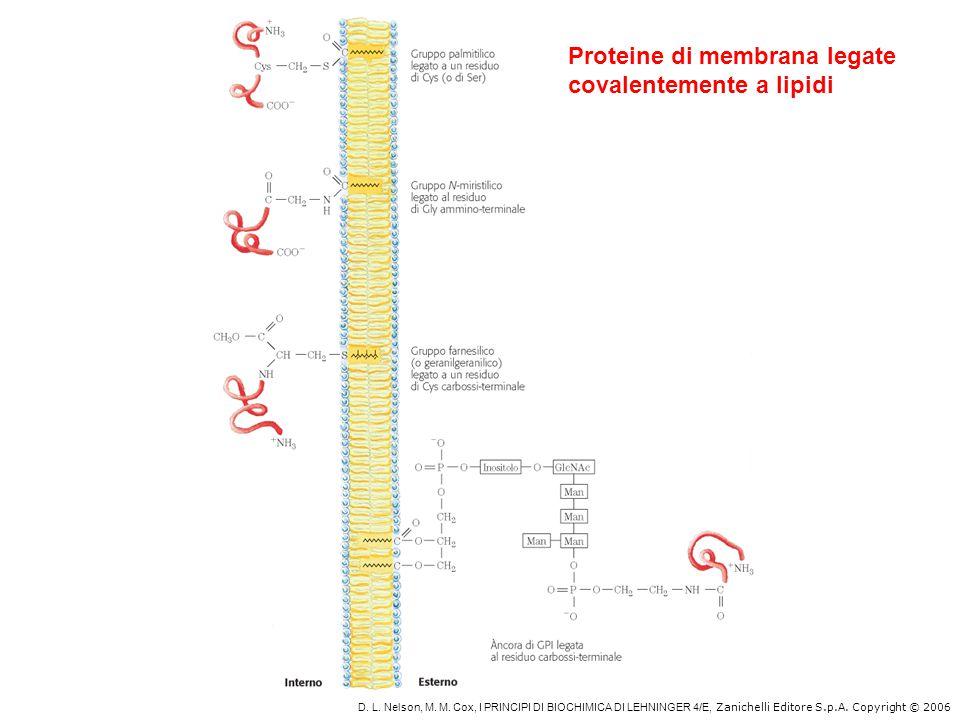 D. L. Nelson, M. M. Cox, I PRINCIPI DI BIOCHIMICA DI LEHNINGER 4/E, Zanichelli Editore S.p.A. Copyright © 2006 Proteine di membrana legate covalenteme