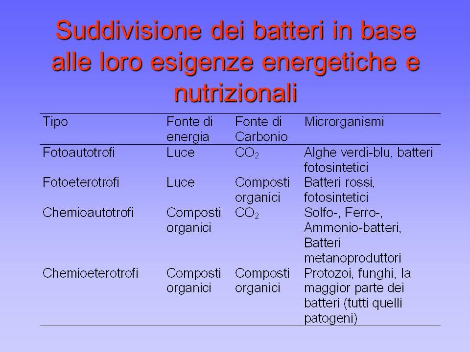 Fattori condizionanti la crescita microbica FATTORI NUTRIZIONALI H 2 O = fattore indispensabile per le reazioni chimiche Macronutrienti: Fonti di : Carbonio (C), Azoto (N), Fosforo (P), Zolfo (S), Potassio (K), Magnesio (Mg), Calcio (Ca), Sodio (Na), Ferro (Fe) Micronutrienti (elementi in tracce) Fattori di crescita (vitamine, aminoacidi, nucleotidi)