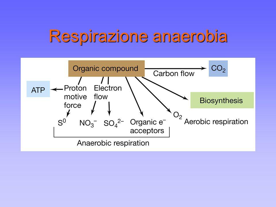 Respirazione anaerobia