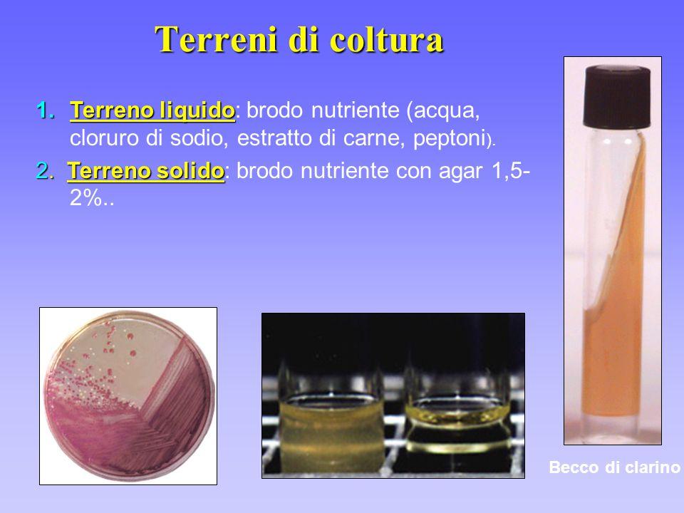 1.Terreno liquido 1.Terreno liquido: brodo nutriente (acqua, cloruro di sodio, estratto di carne, peptoni ). 2.Terreno solido 2. Terreno solido: brodo