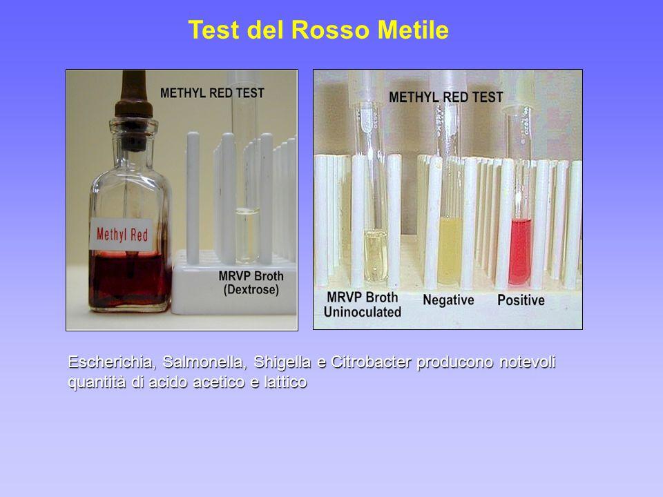 Test del Rosso Metile Escherichia, Salmonella, Shigella e Citrobacter producono notevoli quantità di acido acetico e lattico