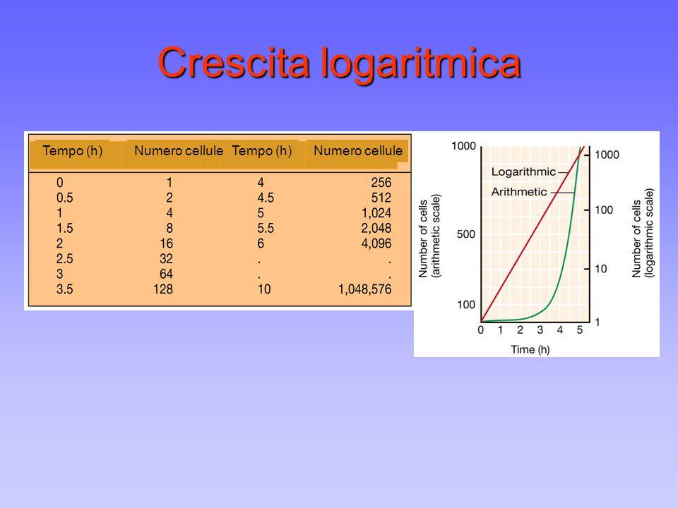 Crescita logaritmica Tempo (h) Numero cellule