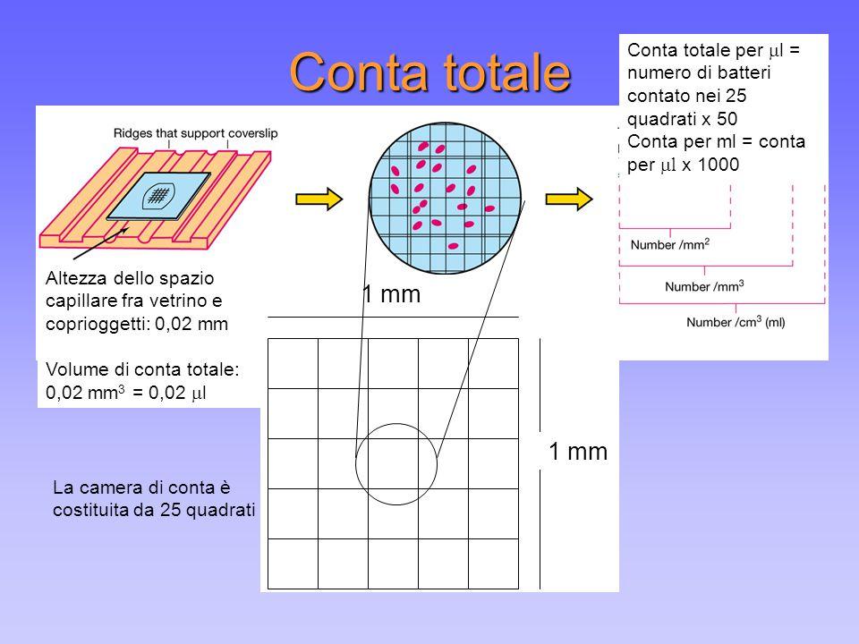 Conta totale Altezza dello spazio capillare fra vetrino e coprioggetti: 0,02 mm Volume di conta totale: 0,02 mm 3 = 0,02  l Conta totale per  l = nu