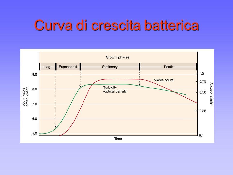 Generazione della forza proto- motrice nella respirazione aerobica 1 NADH = 12 protoni