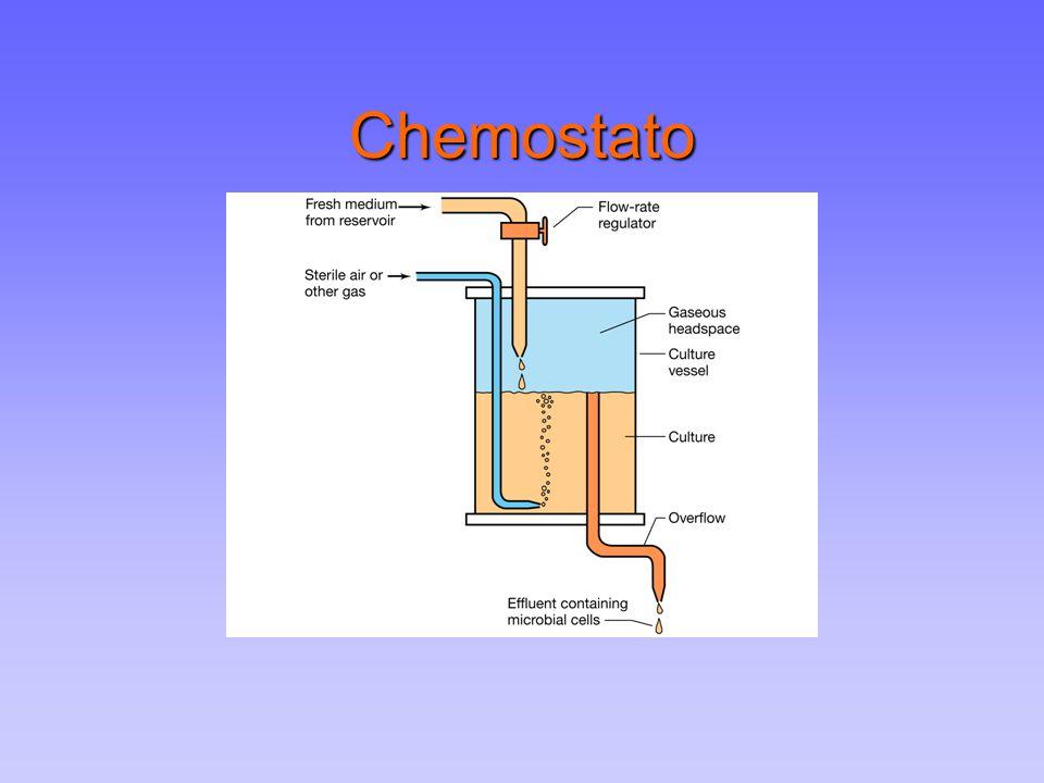 Chemostato