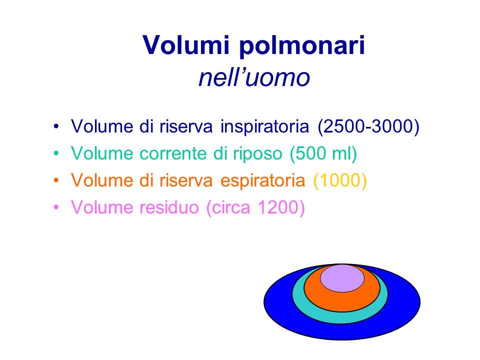 Volumi polmonari nell'uomo Volume di riserva inspiratoria (2500-3000) Volume corrente di riposo (500 ml) Volume di riserva espiratoria (1000) Volume residuo (circa 1200)