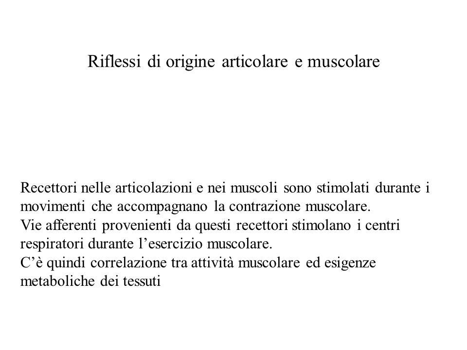 Riflessi di origine articolare e muscolare Recettori nelle articolazioni e nei muscoli sono stimolati durante i movimenti che accompagnano la contrazione muscolare.
