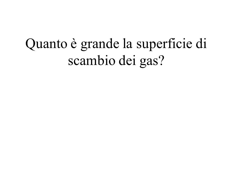 Quanto è grande la superficie di scambio dei gas?