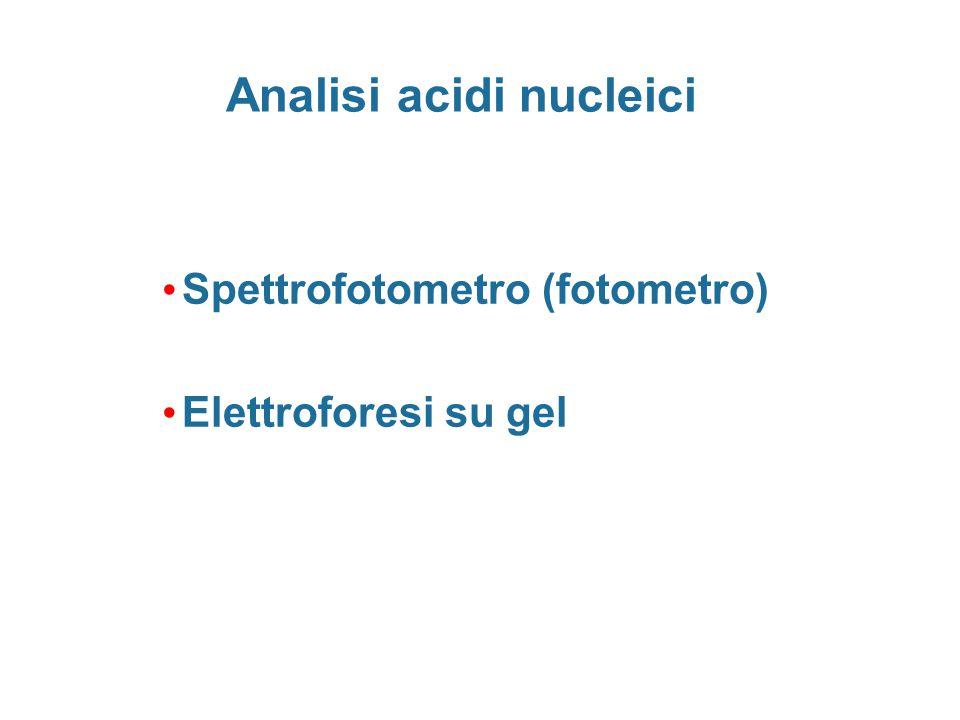 Spettrofotometro (fotometro) Elettroforesi su gel Analisi acidi nucleici