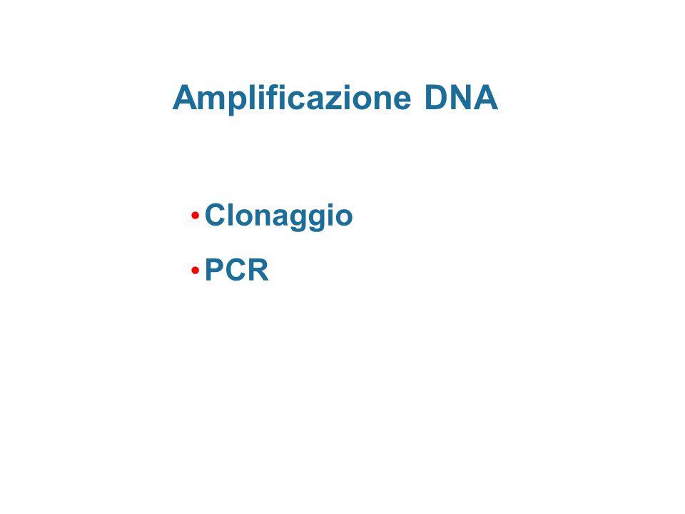 Clonaggio PCR Amplificazione DNA
