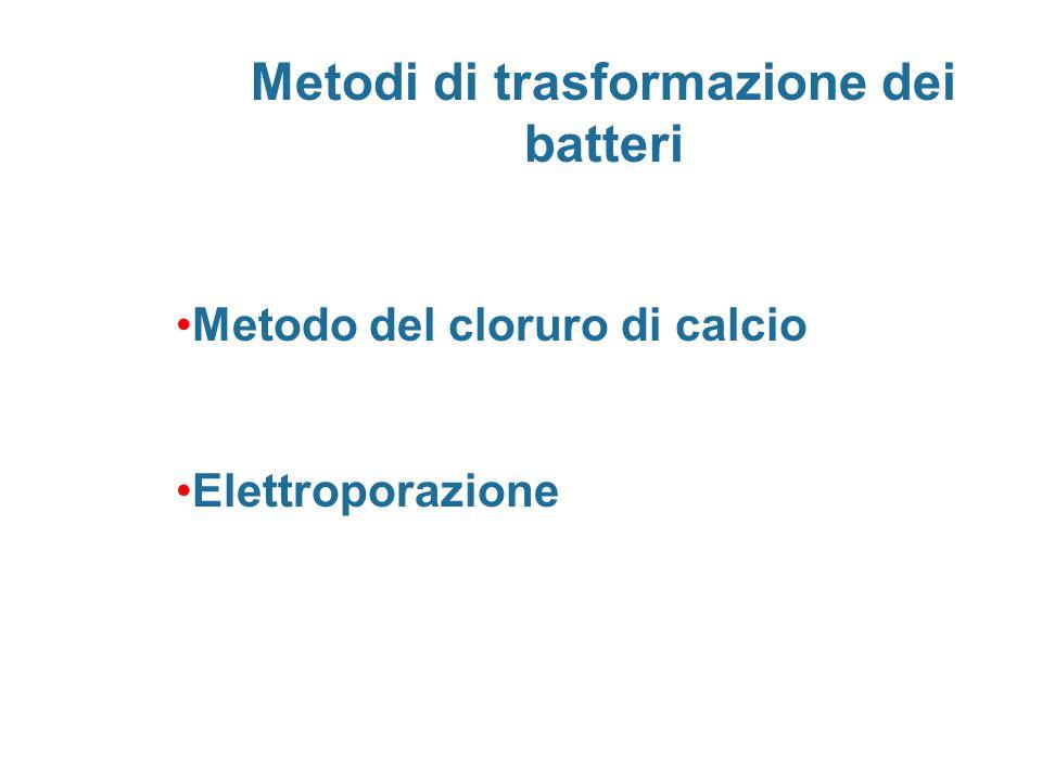 Metodi di trasformazione dei batteri Metodo del cloruro di calcio Elettroporazione