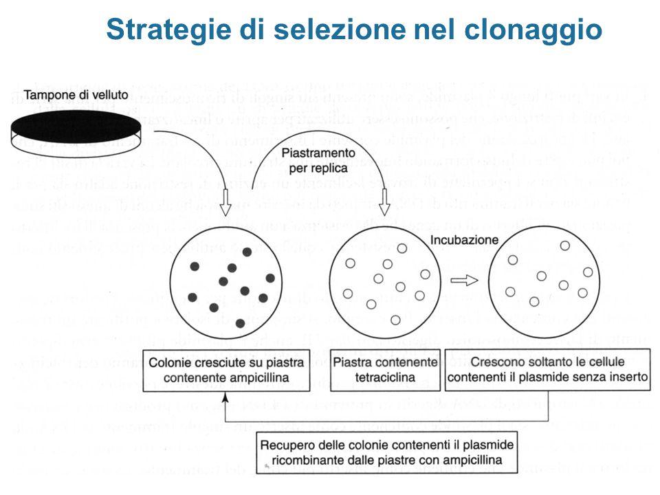 Strategie di selezione nel clonaggio
