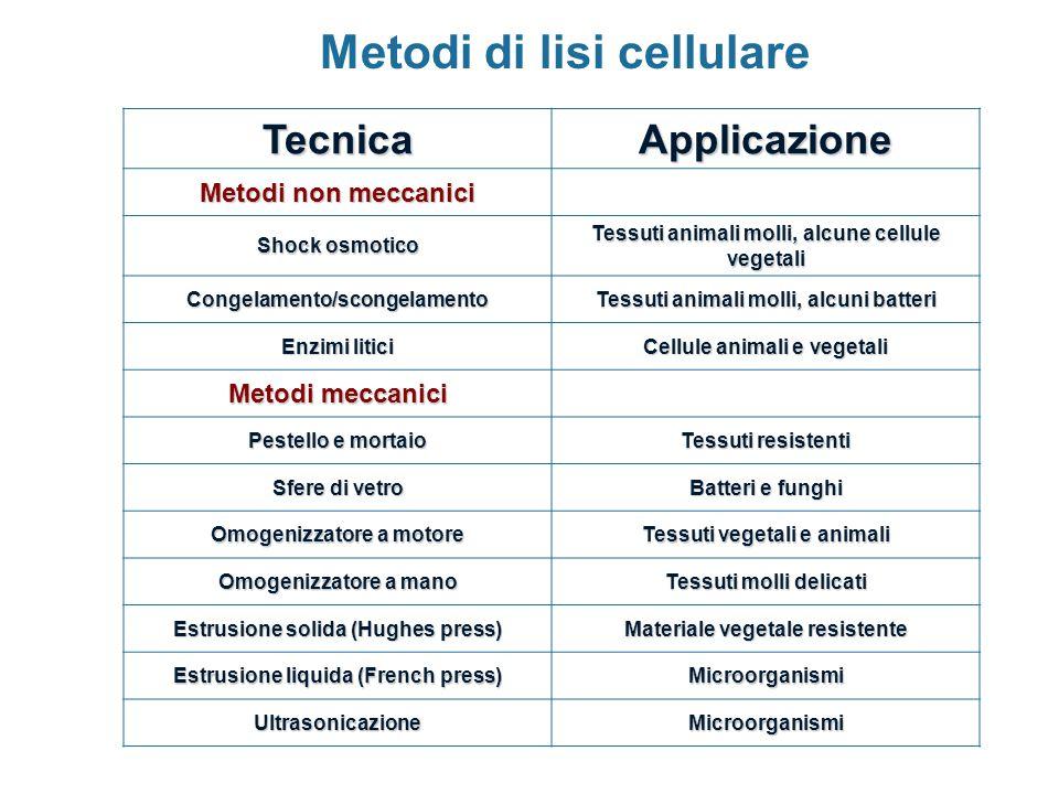 Metodi di lisi cellulare TecnicaApplicazione Metodi non meccanici Shock osmotico Tessuti animali molli, alcune cellule vegetali Congelamento/scongelam