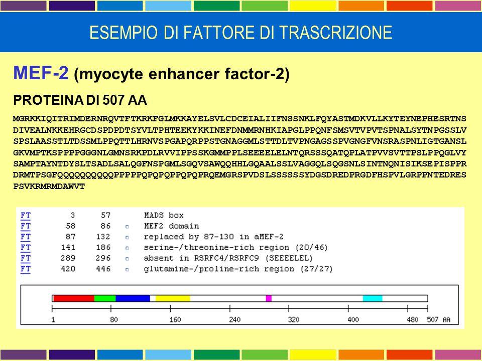 MEF-2 (myocyte enhancer factor-2) PROTEINA DI 507 AA MGRKKIQITRIMDERNRQVTFTKRKFGLMKKAYELSVLCDCEIALIIFNSSNKLFQYASTMDKVLLKYTEYNEPHESRTNS DIVEALNKKEHRGCD