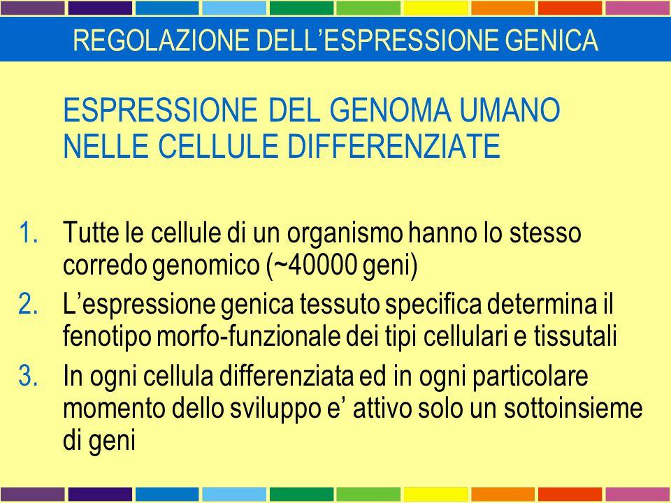 Restrizione spaziale e temporale dell'espressione genica  Geni housekeeping  Geni con espressione ristretta nello spazio Espressione in piu' organi/tessuti diversi Stesso ruolo in piu' tessuti Il gene codifica per diverse isoforme (promotori alternativi e/o splicing alternativo tessuto specifico) Espressione specifica per tessuto, linea o tipo cellulare Espressione solo in singole cellule Distribuzione intracellulare o extracellulare  Geni con espressione ristretta nel tempo  Stadio di sviluppo  Stadio di differenziamento  Momento del ciclo cellulare  Espressione inducibile da parte di fattori ambientali o extracellulari REGOLAZIONE DELL'ESPRESSIONE GENICA