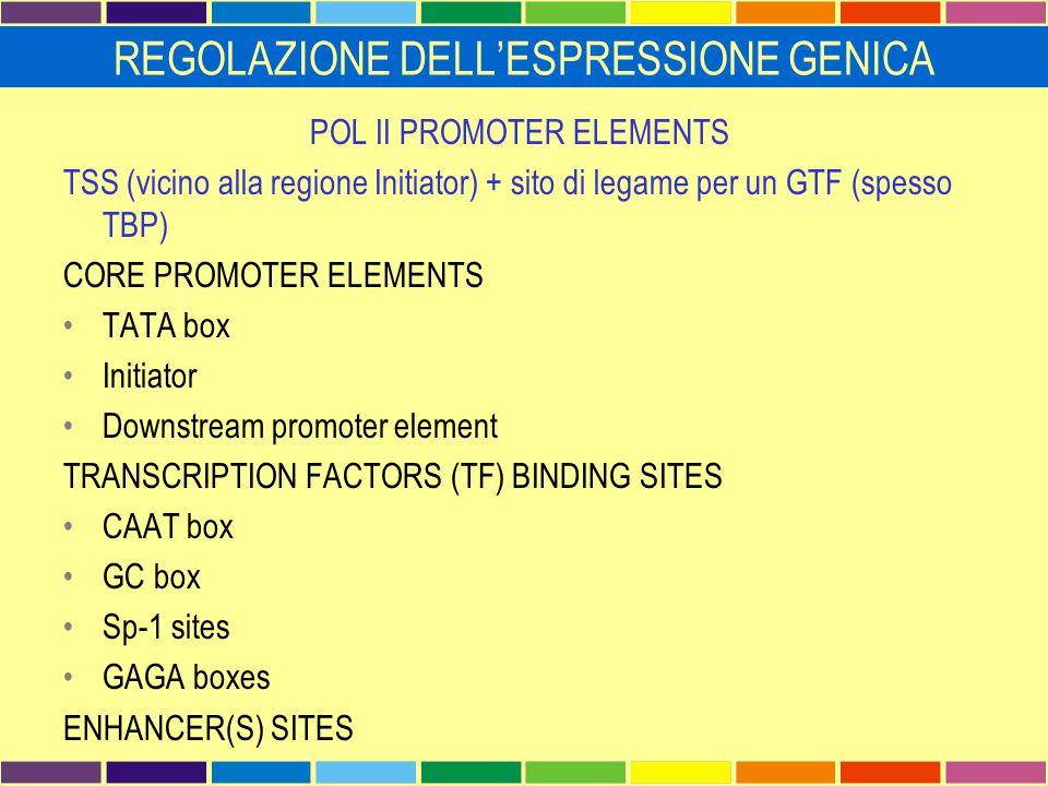 REGOLAZIONE DELL'ESPRESSIONE GENICA POL II PROMOTER ELEMENTS TSS (vicino alla regione Initiator) + sito di legame per un GTF (spesso TBP) CORE PROMOTE