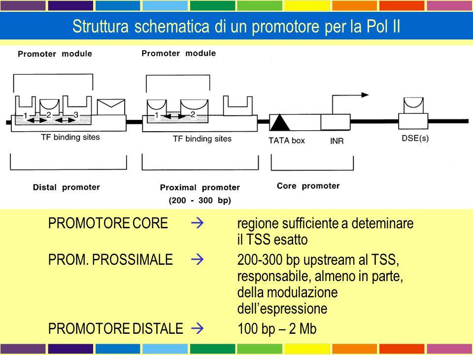 Struttura schematica di un promotore per la Pol II PROMOTORE CORE  regione sufficiente a deteminare il TSS esatto PROM. PROSSIMALE  200-300 bp upstr