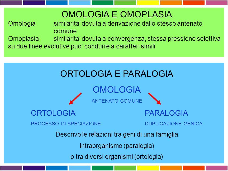 RICERCA DI SIMILARITÀ SIMILARITA'  ?  OMOLOGIA OMOLOGIA proprieta' di caratteri (sequenze) dovuta alla loro derivazione dallo stesso antenato comune