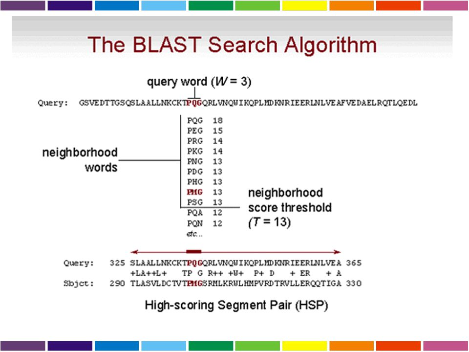 BLAST Basic Local Alignment Search Tool (Altschul 1990) L' algoritmo di BLAST e' euristico e opera: 1Tagliando le sequenze da comparare in piccoli pez