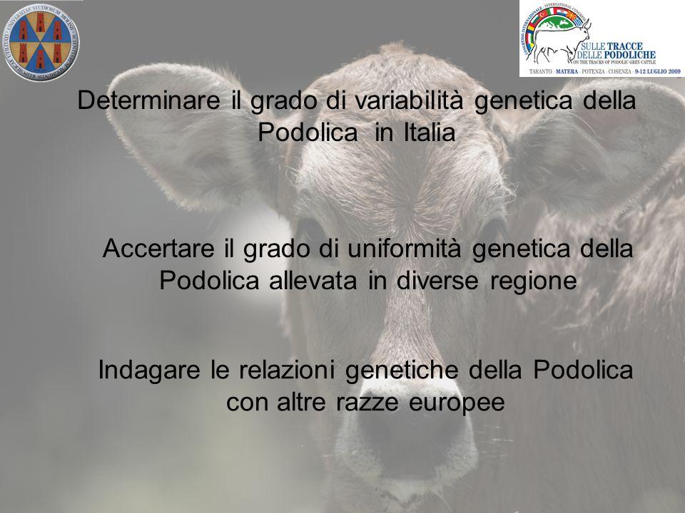 Campionati 134 soggetti di razza Podolica in 14 allevamenti dislocati in 4 regioni italiane (Campania, Basilicata, Puglia e Molise) 40 razze bovine Europee indagate dall'European Cattle Genetic Diversity Consortium nell'ambito del progetto RESGEN N.