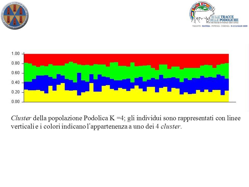Cluster della popolazione Podolica K =4; gli individui sono rappresentati con linee verticali e i colori indicano l ' appartenenza a uno dei 4 cluster.
