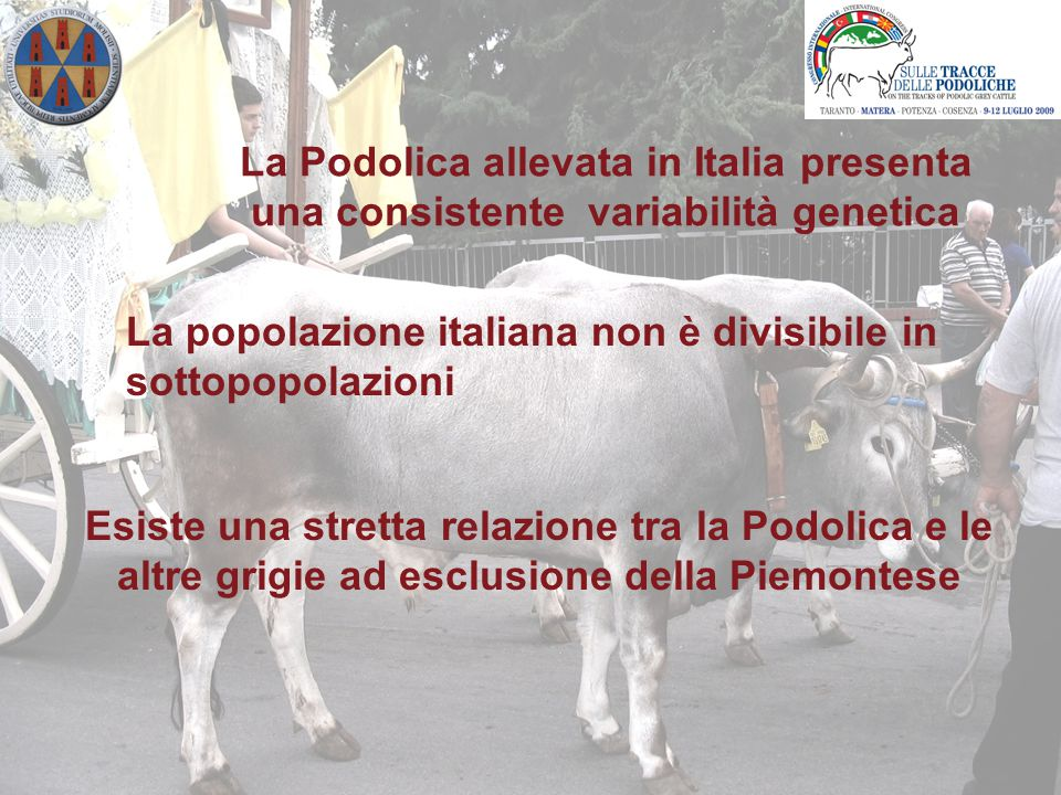 La Podolica allevata in Italia presenta una consistente variabilità genetica Esiste una stretta relazione tra la Podolica e le altre grigie ad esclusione della Piemontese La popolazione italiana non è divisibile in sottopopolazioni