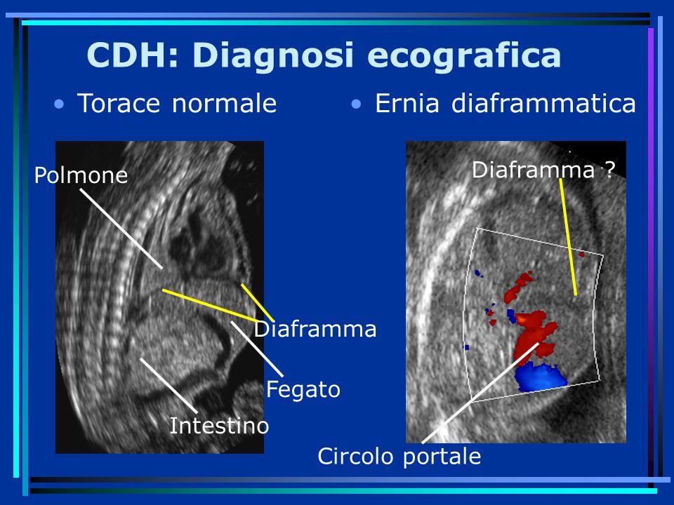 Polmone Fegato Diaframma Intestino Circolo portale Diaframma .
