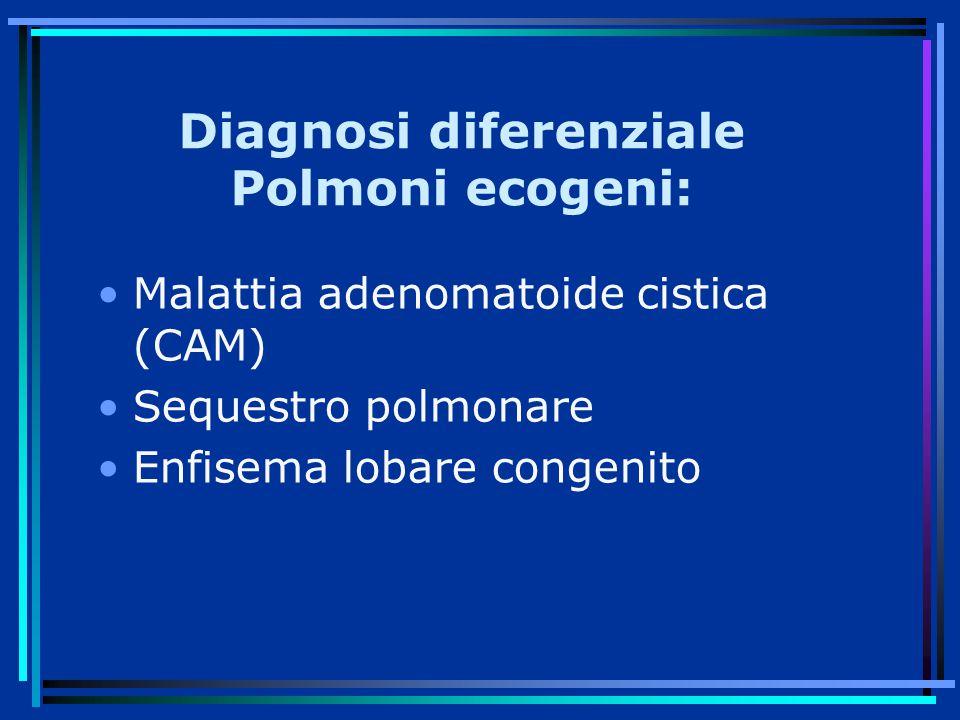 Diagnosi diferenziale Polmoni ecogeni: Malattia adenomatoide cistica (CAM) Sequestro polmonare Enfisema lobare congenito