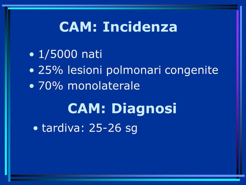 CAM: Incidenza 1/5000 nati 25% lesioni polmonari congenite 70% monolaterale CAM: Diagnosi tardiva: 25-26 sg