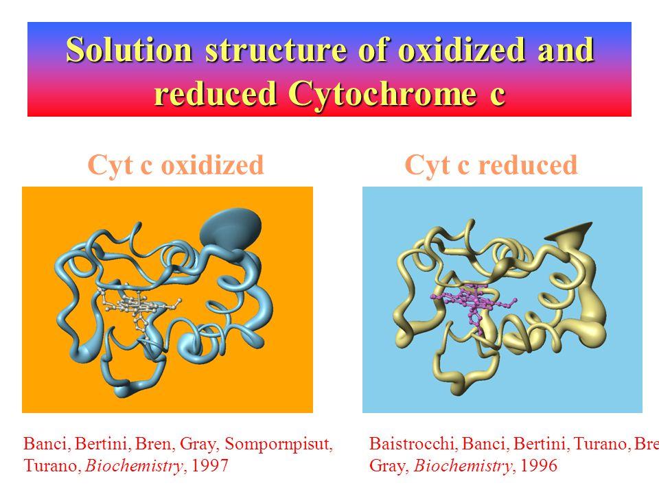 Cyt c oxidizedCyt c reduced Banci, Bertini, Bren, Gray, Sompornpisut, Turano, Biochemistry, 1997 Baistrocchi, Banci, Bertini, Turano, Bren, Gray, Bioc