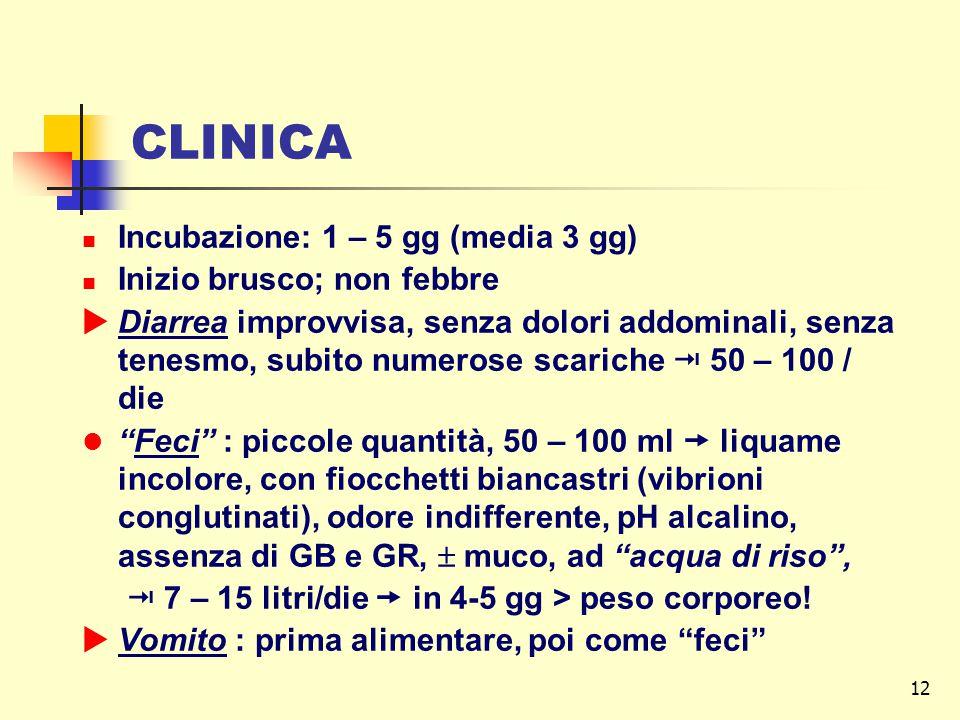 12 CLINICA Incubazione: 1 – 5 gg (media 3 gg) Inizio brusco; non febbre  Diarrea improvvisa, senza dolori addominali, senza tenesmo, subito numerose scariche  50 – 100 / die Feci : piccole quantità, 50 – 100 ml  liquame incolore, con fiocchetti biancastri (vibrioni conglutinati), odore indifferente, pH alcalino, assenza di GB e GR,  muco, ad acqua di riso ,  7 – 15 litri/die  in 4-5 gg > peso corporeo.
