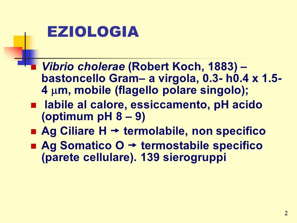 2 EZIOLOGIA Vibrio cholerae (Robert Koch, 1883) – bastoncello Gram– a virgola, 0.3- h0.4 x 1.5- 4  m, mobile (flagello polare singolo); labile al cal